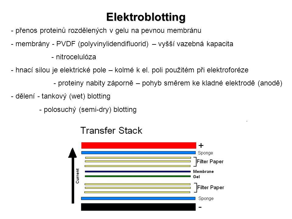 Elektroblotting přenos proteinů rozdělených v gelu na pevnou membránu