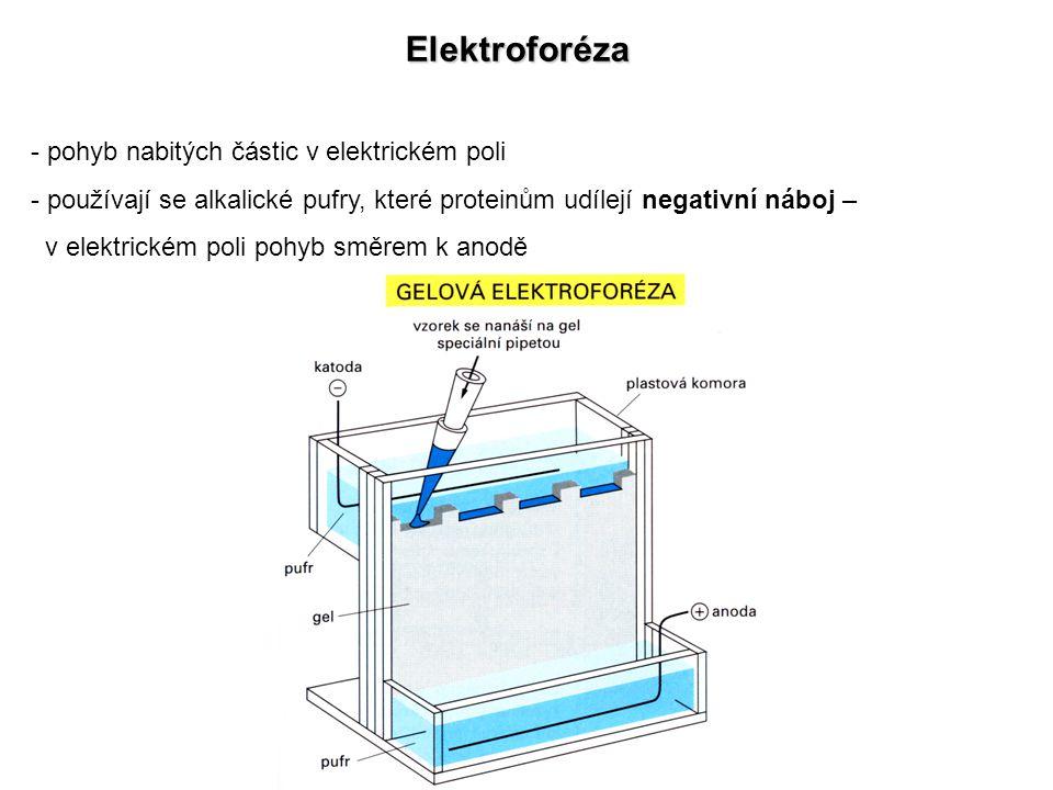 Elektroforéza pohyb nabitých částic v elektrickém poli