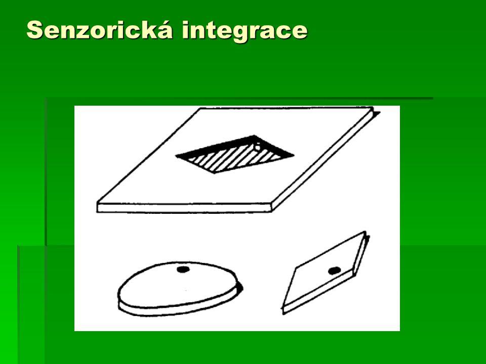 Senzorická integrace