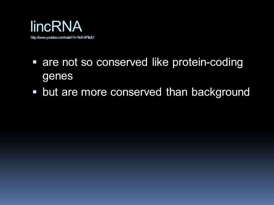 lincRNA http://www.youtube.com/watch v=8e9-APttutU