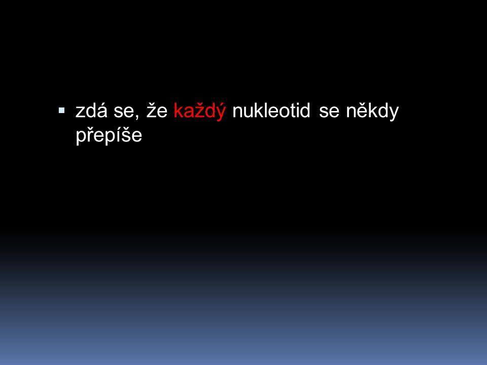zdá se, že každý nukleotid se někdy přepíše