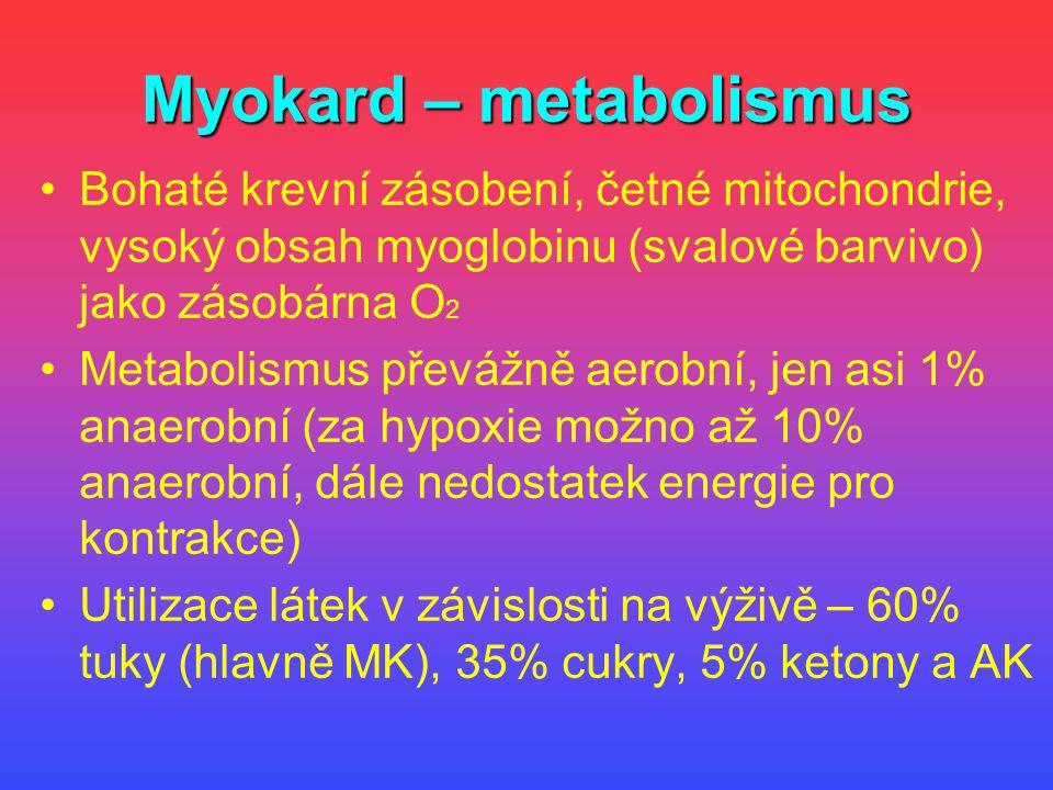 Myokard – metabolismus