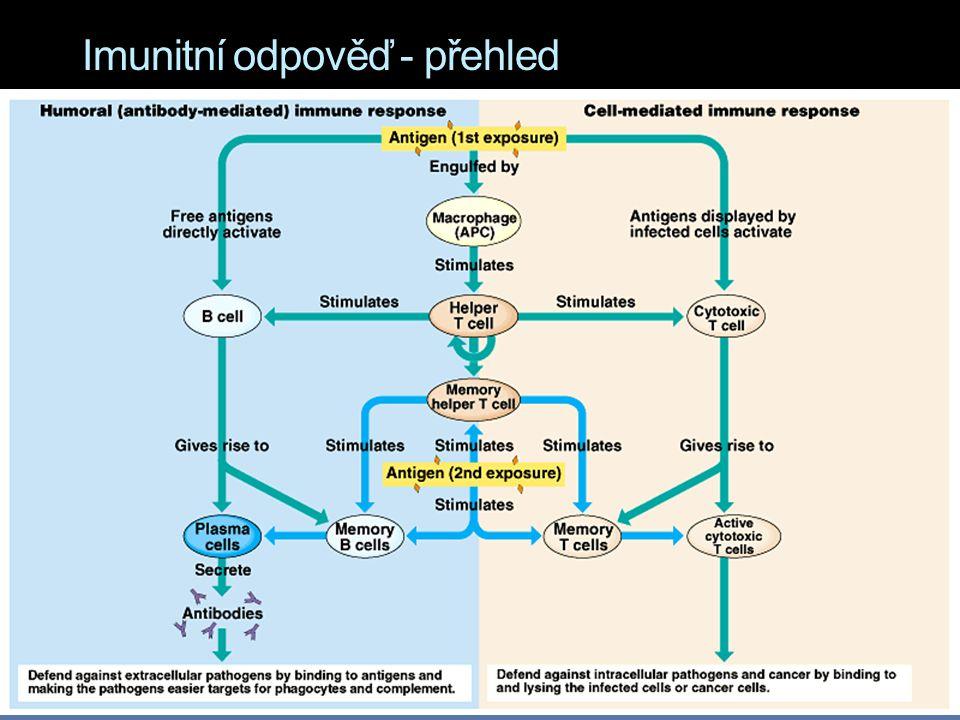 Imunitní odpověď - přehled