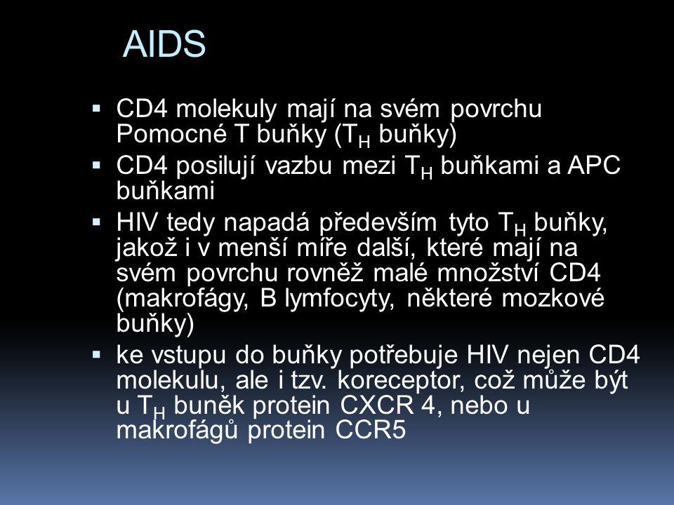AIDS CD4 molekuly mají na svém povrchu Pomocné T buňky (TH buňky)