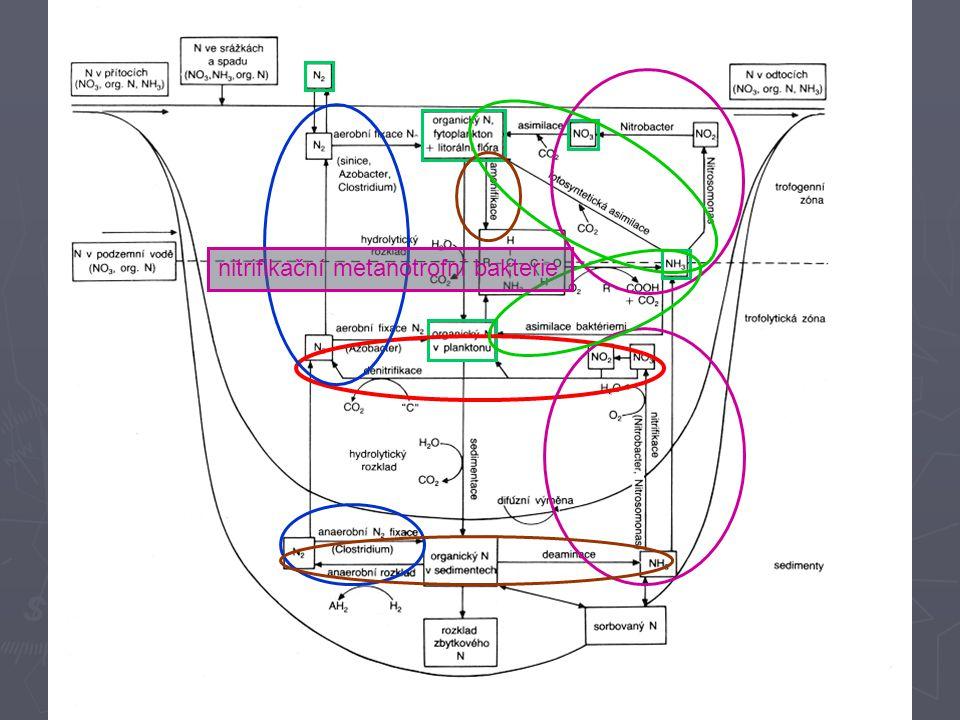 nitrifikační metanotrofní bakterie