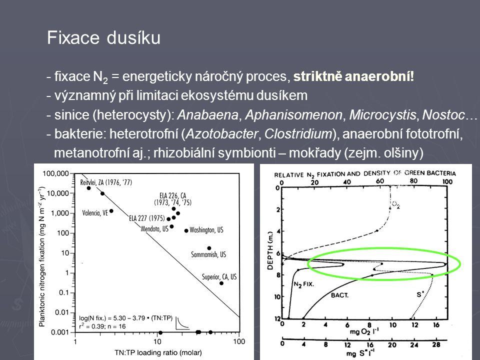 Fixace dusíku - fixace N2 = energeticky náročný proces, striktně anaerobní! - významný při limitaci ekosystému dusíkem.