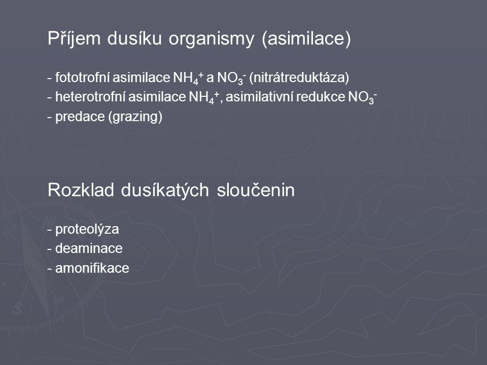 Příjem dusíku organismy (asimilace)