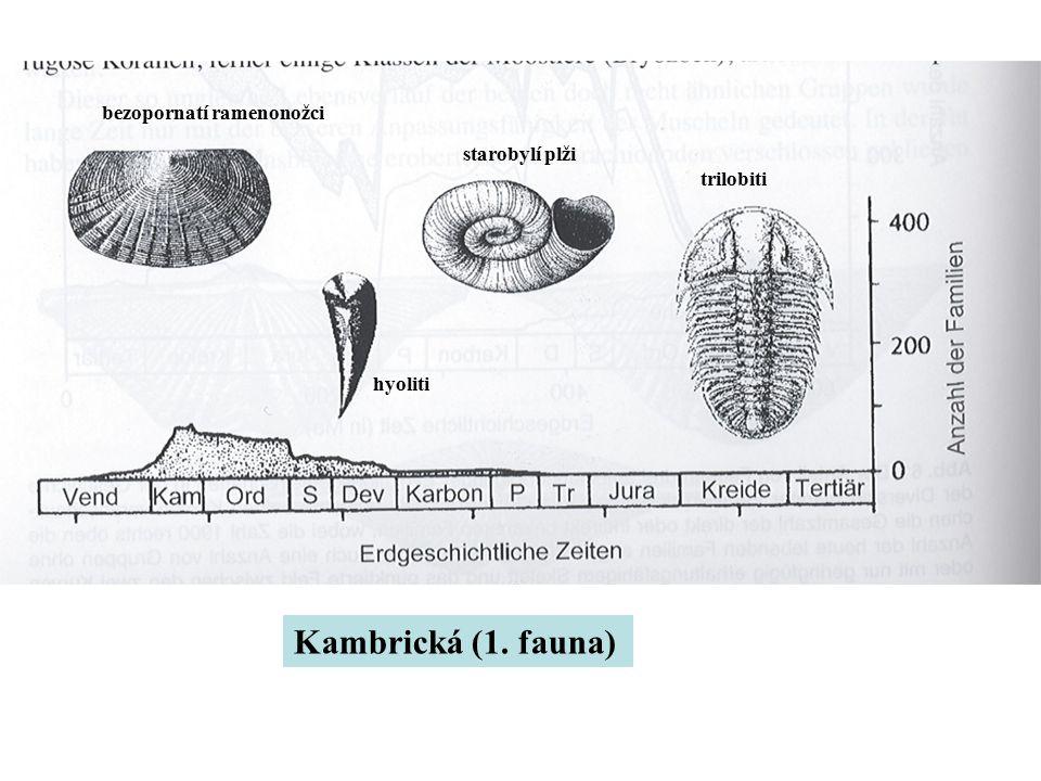 Kambrická (1. fauna) bezopornatí ramenonožci starobylí plži trilobiti