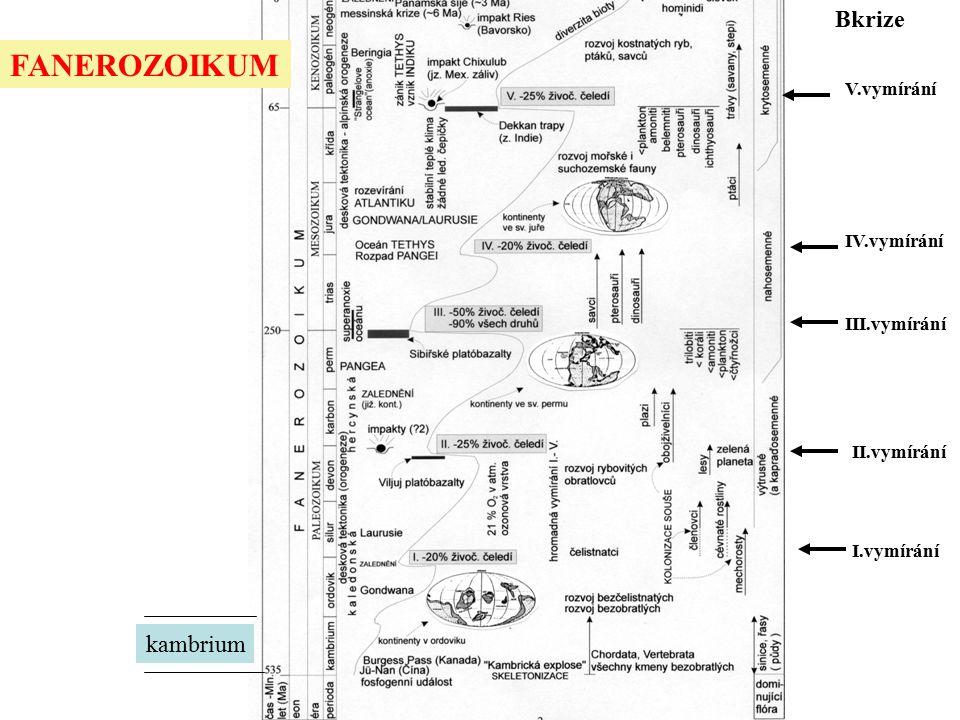 FANEROZOIKUM Bkrize kambrium V.vymírání IV.vymírání III.vymírání