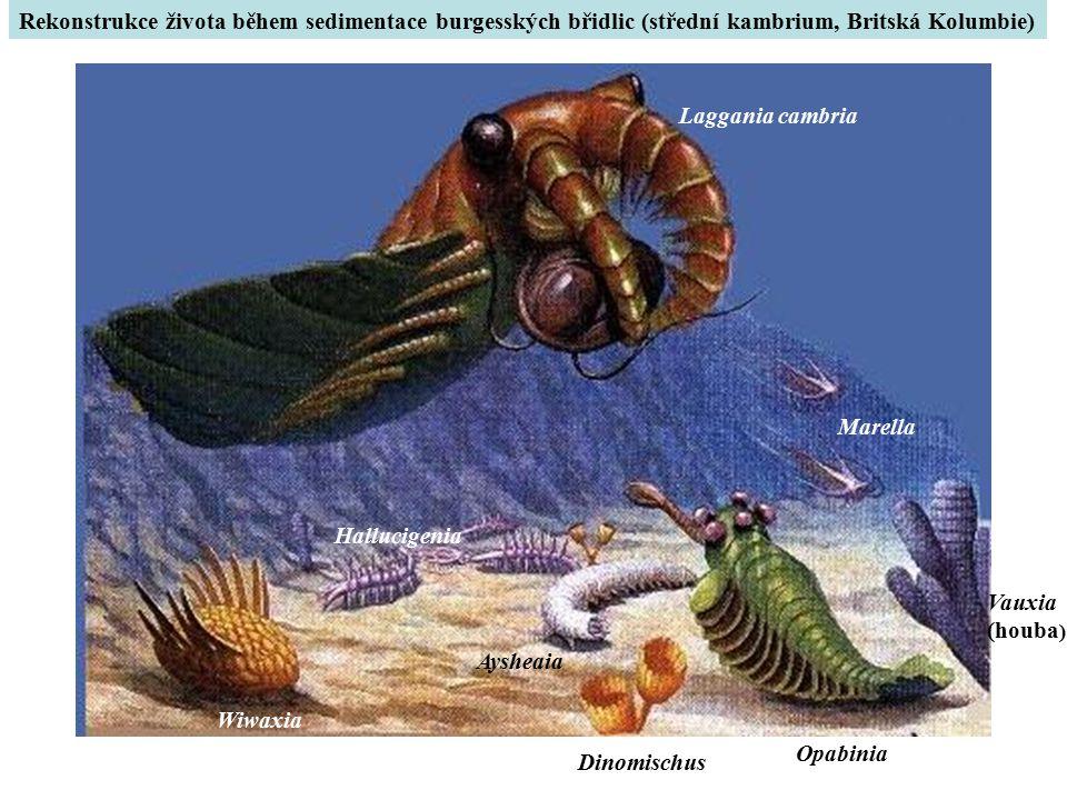 Rekonstrukce života během sedimentace burgesských břidlic (střední kambrium, Britská Kolumbie)