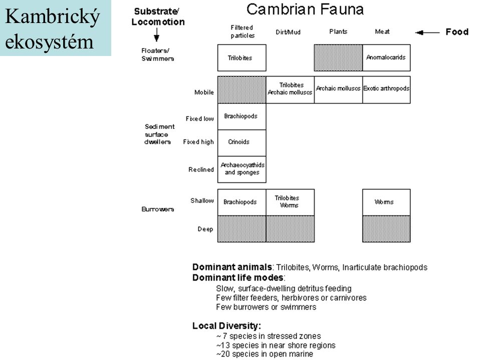 Kambrický ekosystém