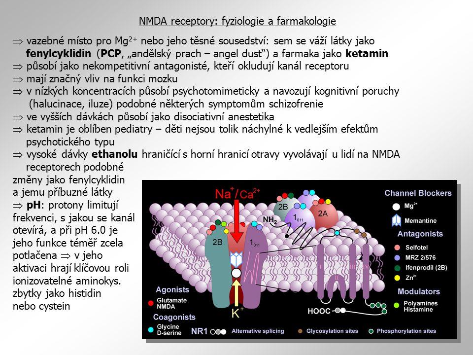 NMDA receptory: fyziologie a farmakologie