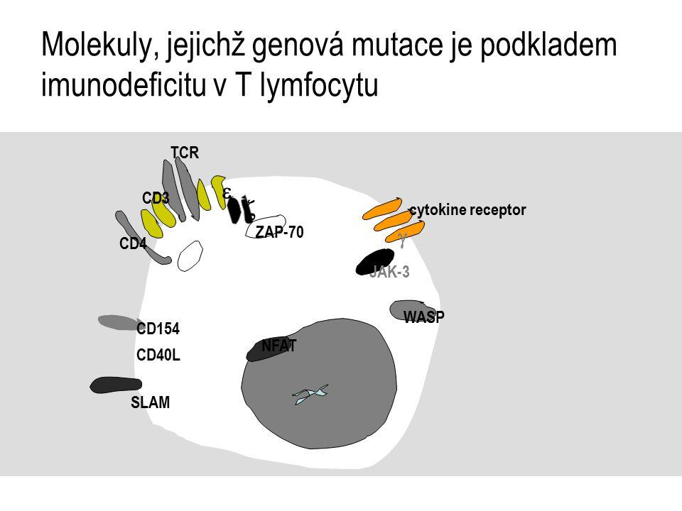 Molekuly, jejichž genová mutace je podkladem imunodeficitu v T lymfocytu