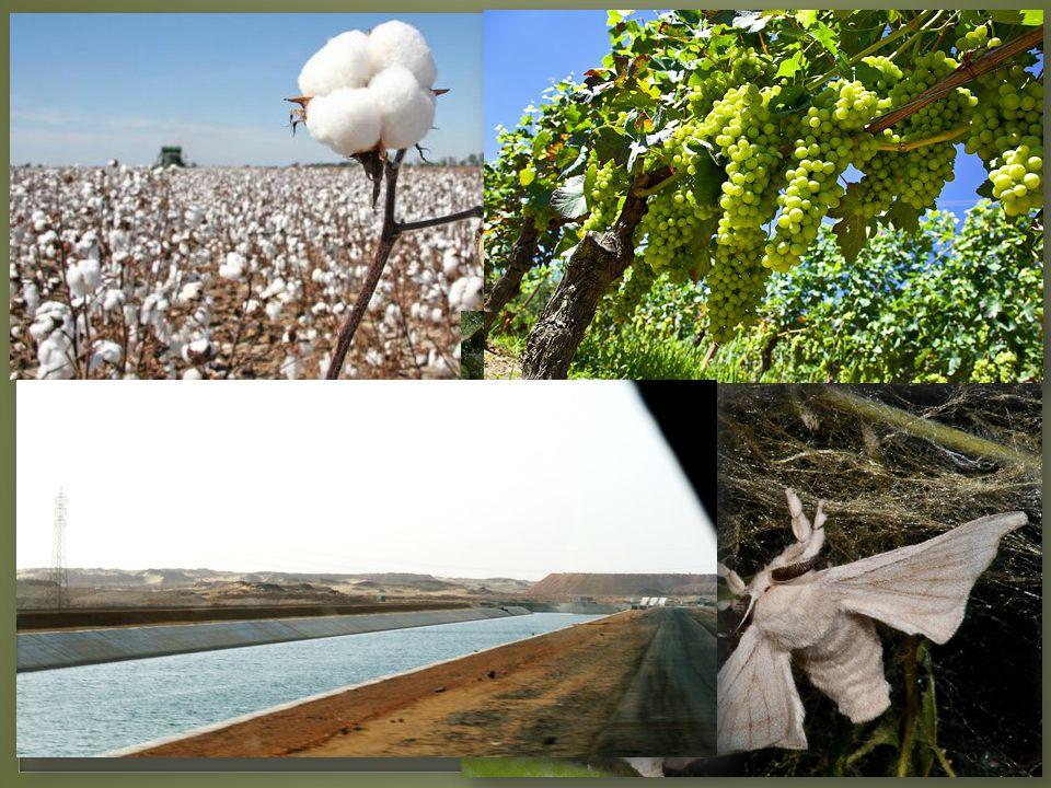 Zemědělství Obilí, bavlník, bourec morušový, víno, ovoce, zelenina