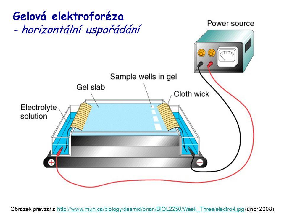 Gelová elektroforéza - horizontální uspořádání