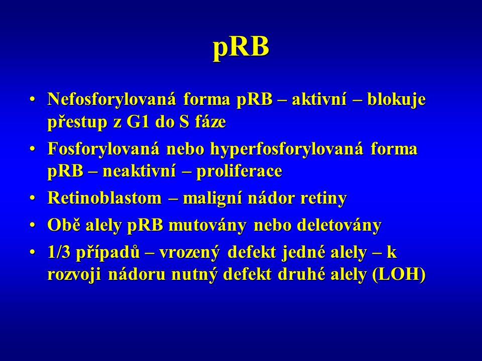 pRB Nefosforylovaná forma pRB – aktivní – blokuje přestup z G1 do S fáze. Fosforylovaná nebo hyperfosforylovaná forma pRB – neaktivní – proliferace.