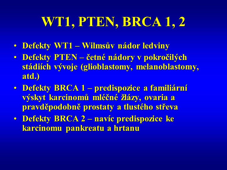 WT1, PTEN, BRCA 1, 2 Defekty WT1 – Wilmsův nádor ledviny