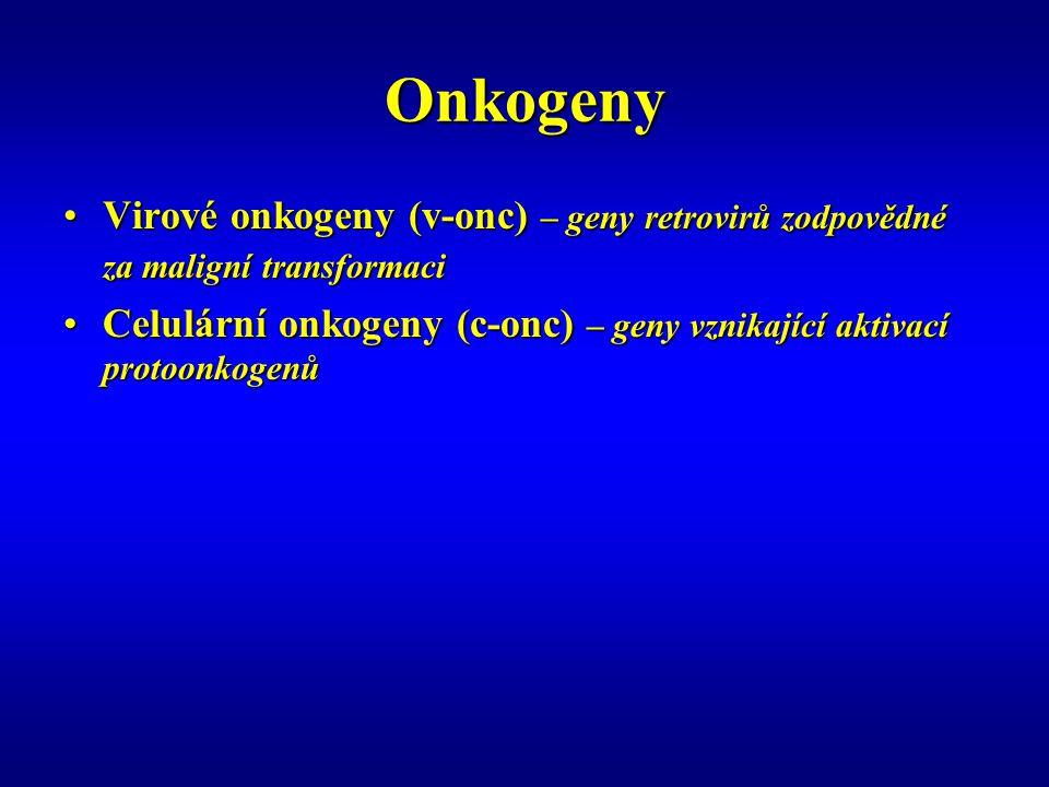 Onkogeny Virové onkogeny (v-onc) – geny retrovirů zodpovědné za maligní transformaci.