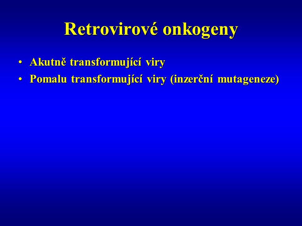 Retrovirové onkogeny Akutně transformující viry