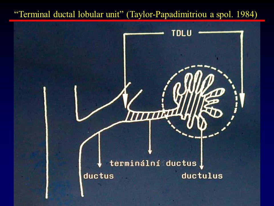 Terminal ductal lobular unit (Taylor-Papadimitriou a spol. 1984)