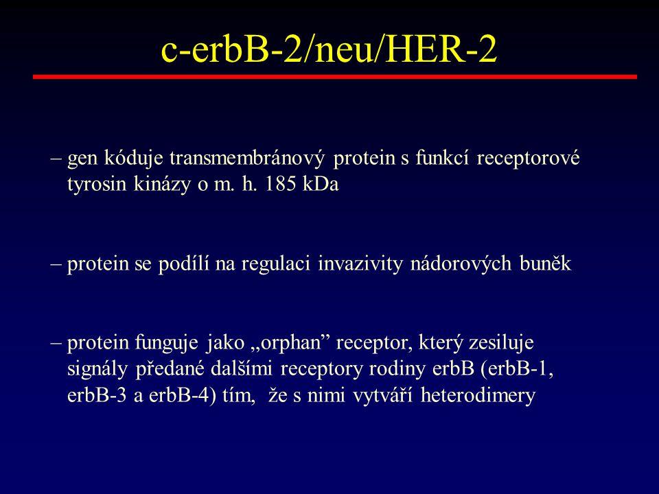 c-erbB-2/neu/HER-2 – gen kóduje transmembránový protein s funkcí receptorové. tyrosin kinázy o m. h. 185 kDa.