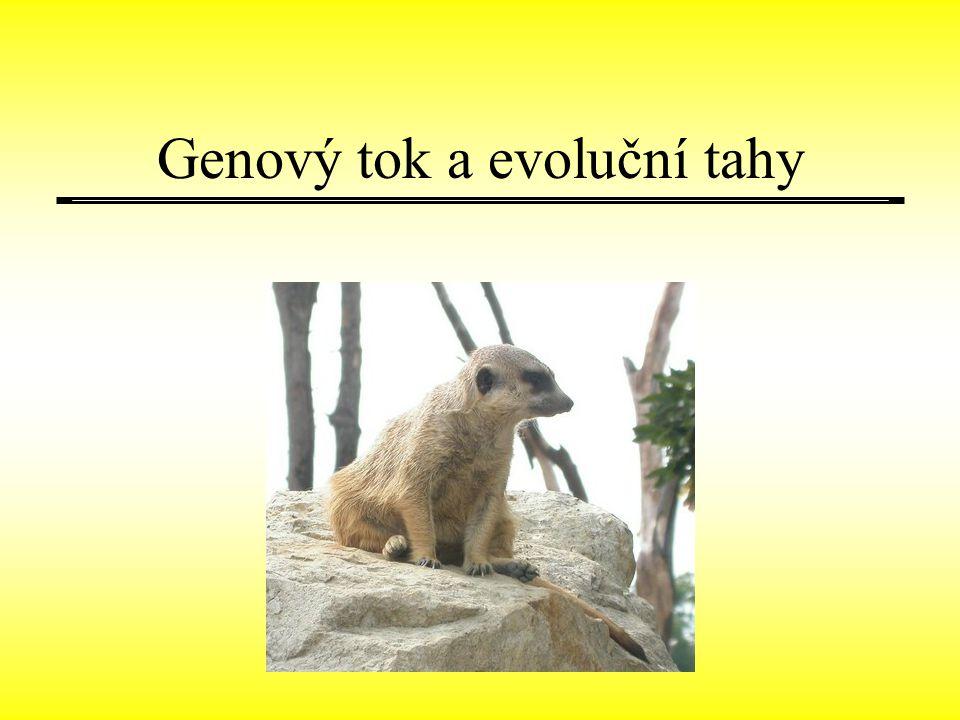 Genový tok a evoluční tahy