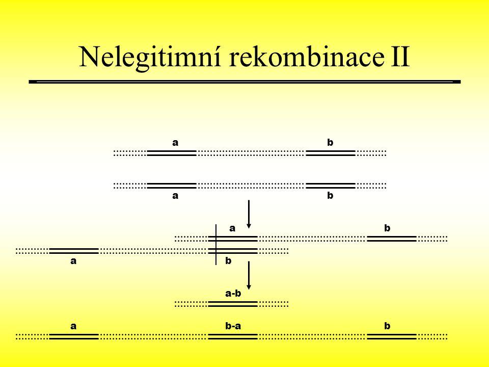 Nelegitimní rekombinace II