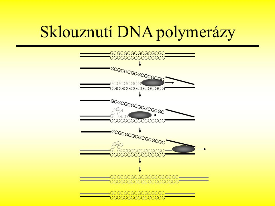 Sklouznutí DNA polymerázy