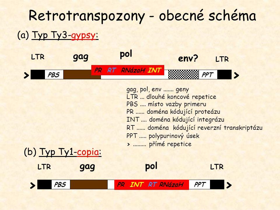 Retrotranspozony - obecné schéma