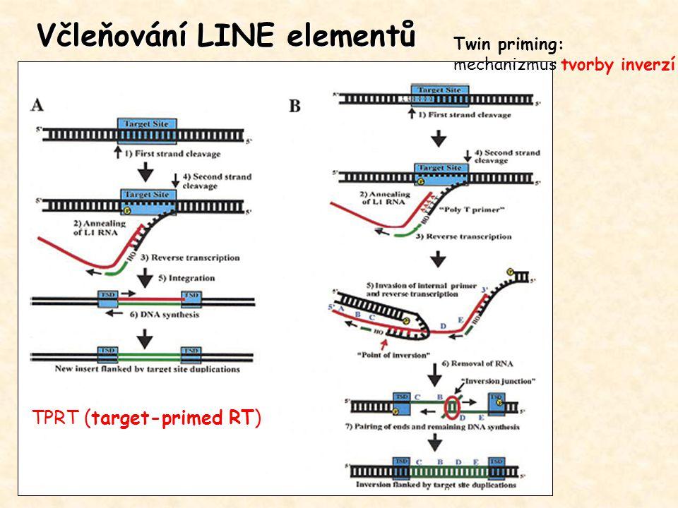 Včleňování LINE elementů