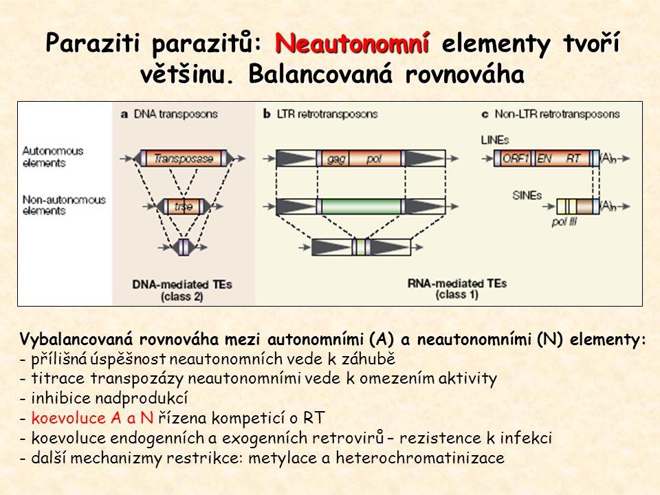 Paraziti parazitů: Neautonomní elementy tvoří většinu