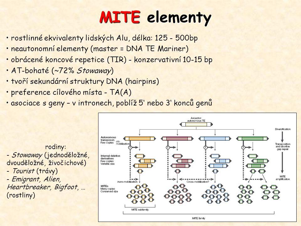 MITE elementy rostlinné ekvivalenty lidských Alu, délka: 125 - 500bp