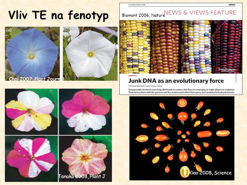 Vliv TE na fenotyp Choi 2007, Plant Journal Xiao 2008, Science