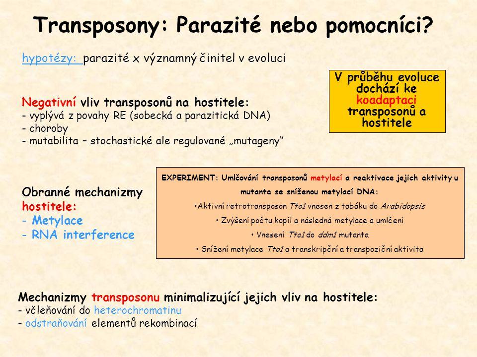 Transposony: Parazité nebo pomocníci