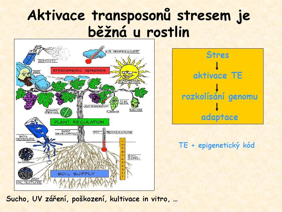 Aktivace transposonů stresem je běžná u rostlin