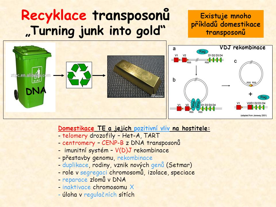 "Recyklace transposonů ""Turning junk into gold"