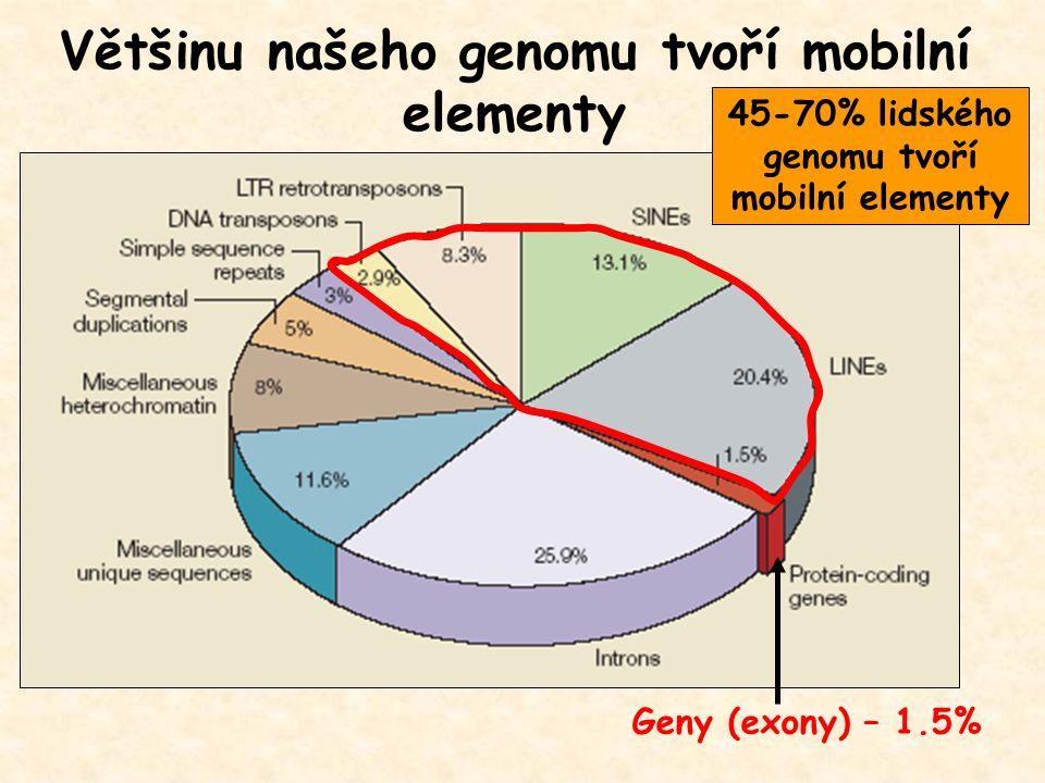 Většinu našeho genomu tvoří mobilní elementy