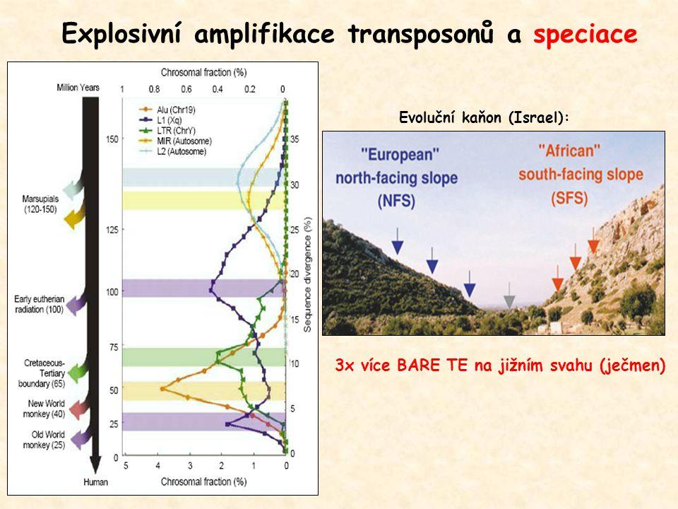 Explosivní amplifikace transposonů a speciace