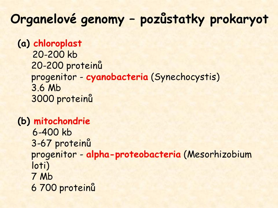 Organelové genomy – pozůstatky prokaryot