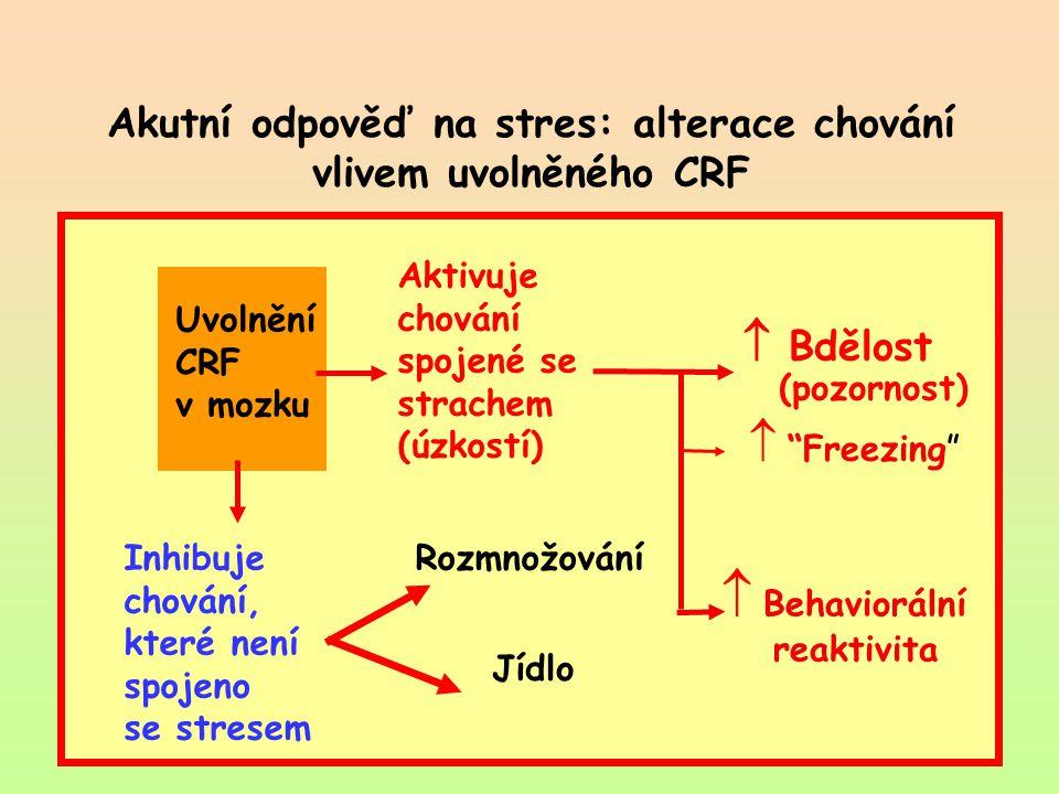 Akutní odpověď na stres: alterace chování vlivem uvolněného CRF