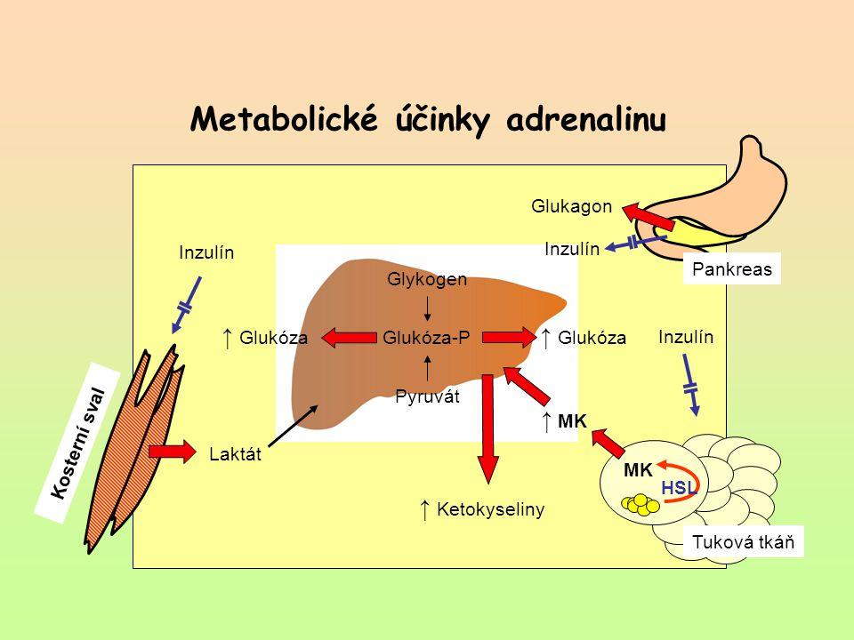 Metabolické účinky adrenalinu