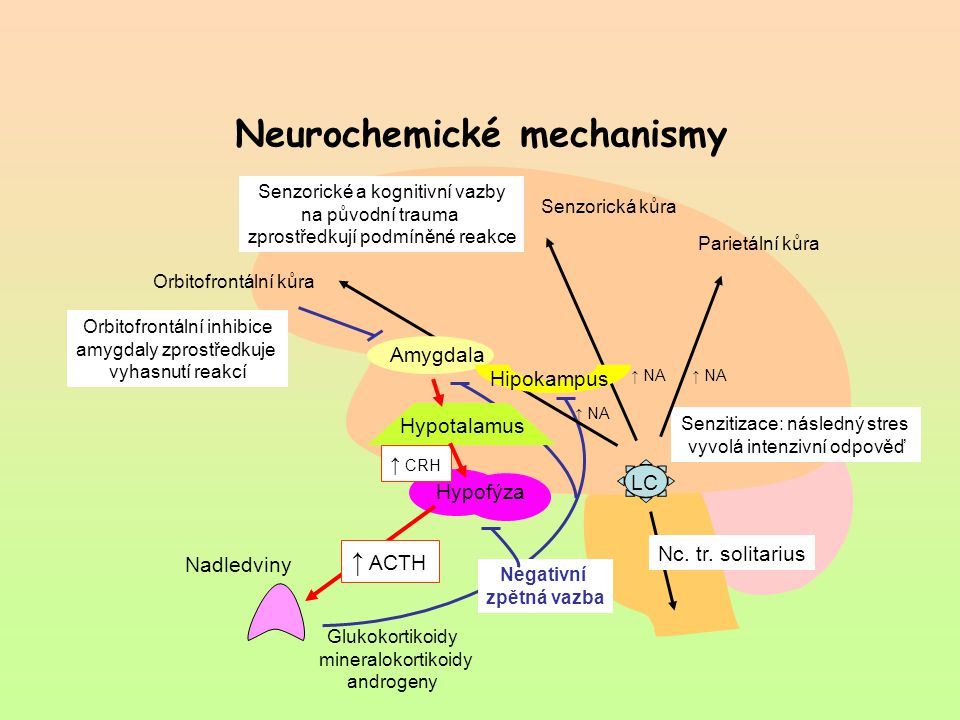 Neurochemické mechanismy