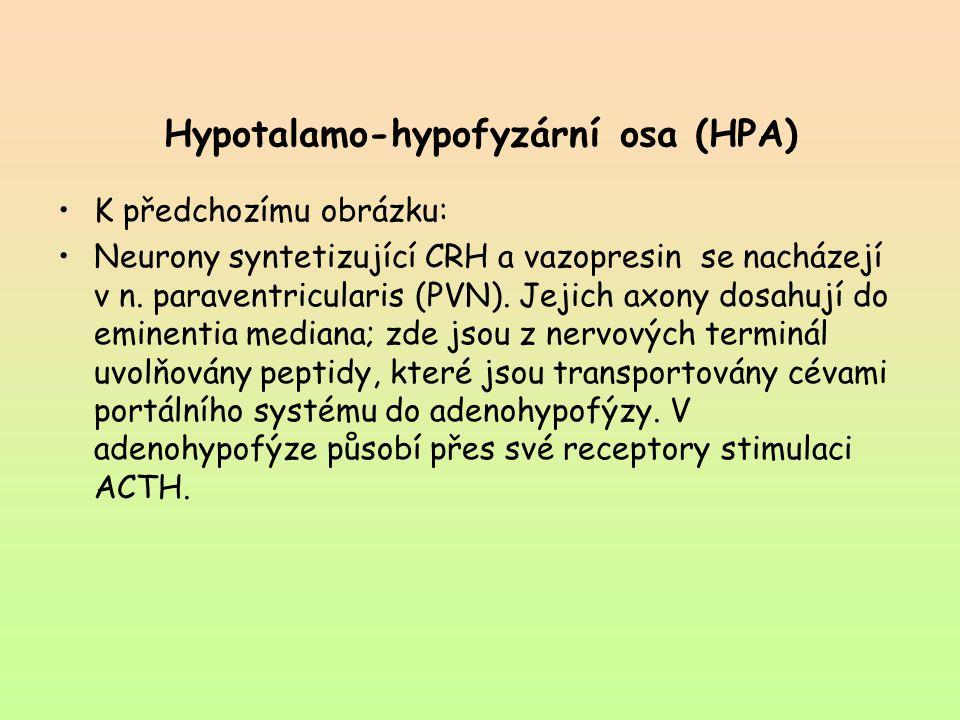 Hypotalamo-hypofyzární osa (HPA)