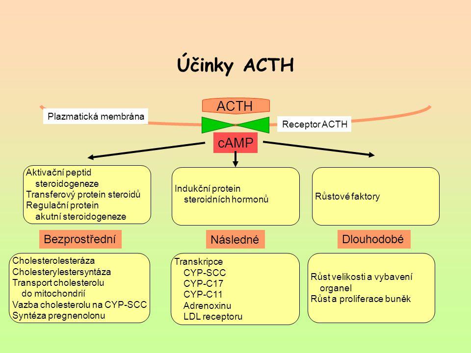 Účinky ACTH ACTH cAMP Bezprostřední Následné Dlouhodobé
