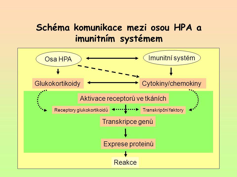 Schéma komunikace mezi osou HPA a imunitním systémem