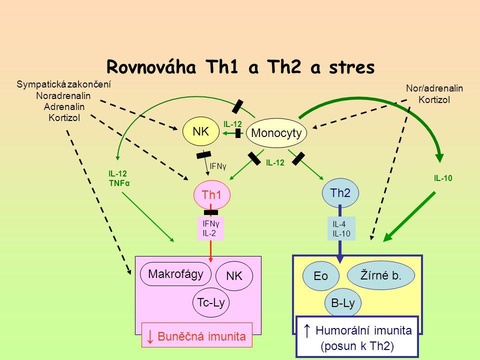 Rovnováha Th1 a Th2 a stres