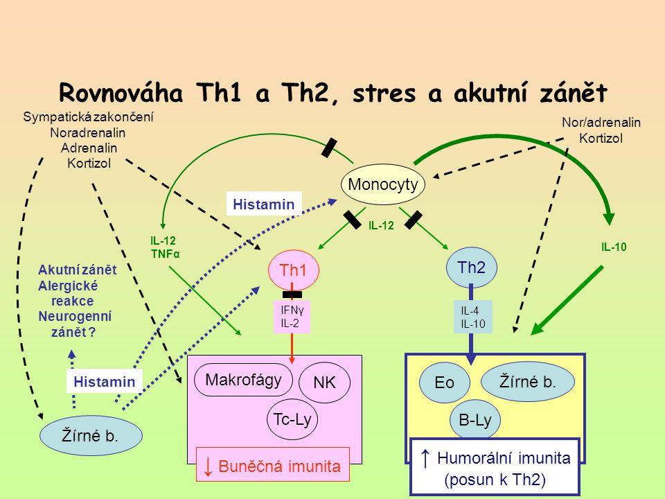 Rovnováha Th1 a Th2, stres a akutní zánět