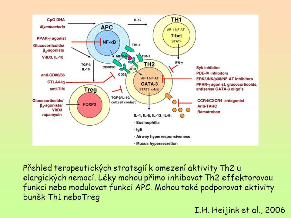 Přehled terapeutických strategií k omezení aktivity Th2 u elargických nemocí. Léky mohou přímo inhibovat Th2 effektorovou funkci nebo modulovat funkci APC. Mohou také podporovat aktivity buněk Th1 neboTreg