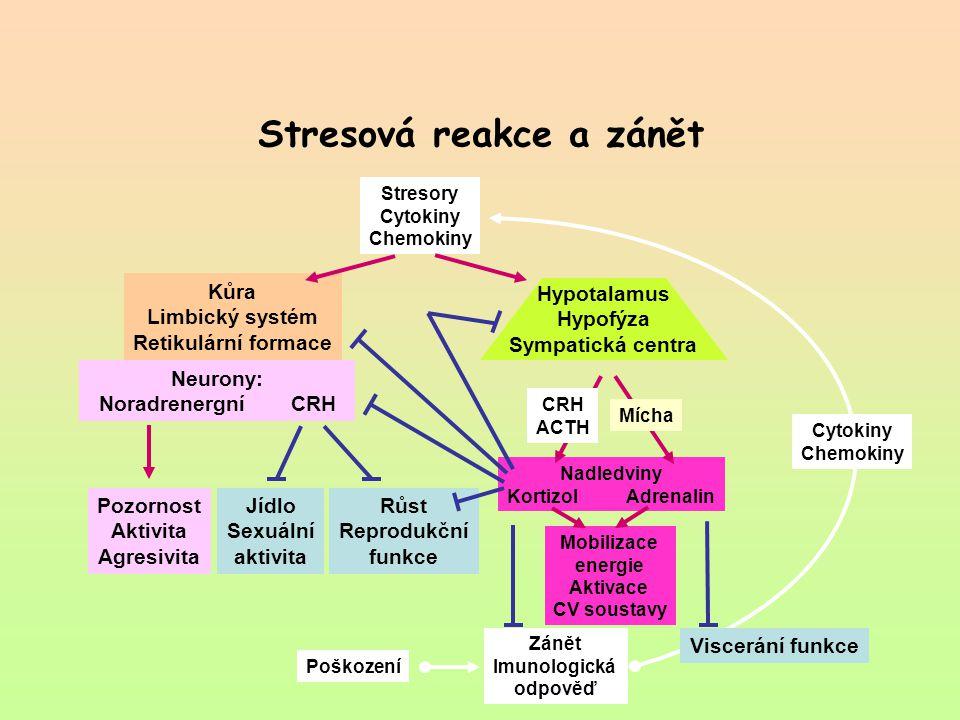 Stresová reakce a zánět