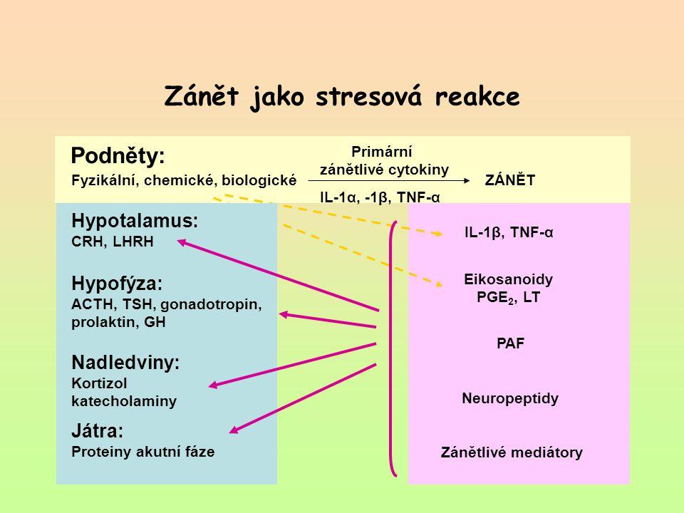 Zánět jako stresová reakce